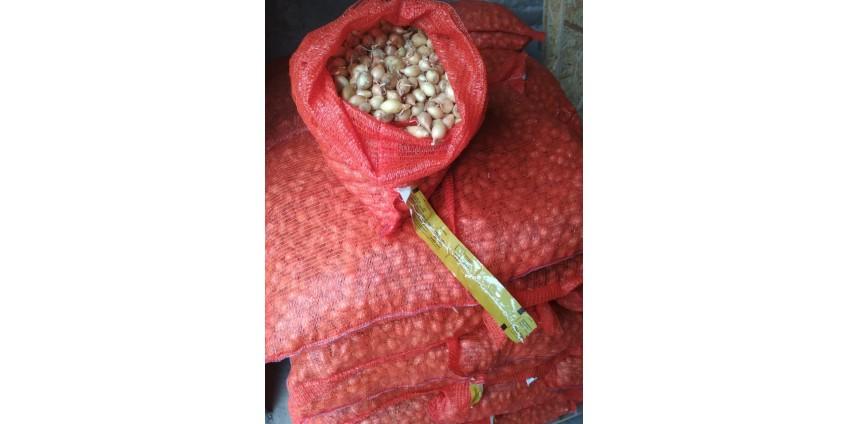 Где купить лук севок